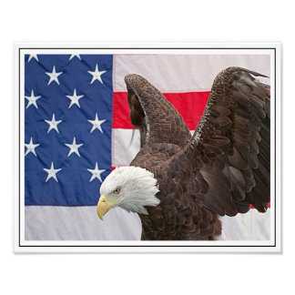Bald Eagle with the American Flag Photograph