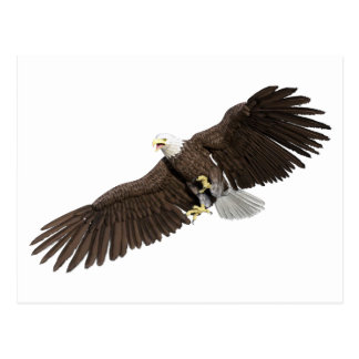 Bald Eagle with wings on down stroke Postcard