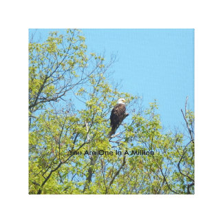 "Bald Eagle  ""You Are One In A Million""  Art Canvas Gallery Wrapped Canvas"