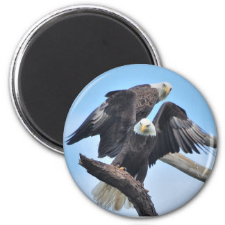 Bald Eagles Magnet