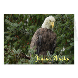 Bald Eagles Of Juneau, Alaska Card