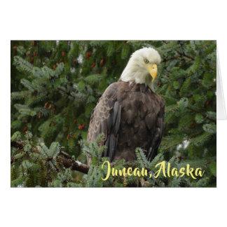 Bald Eagles Of Juneau, Alaska Card