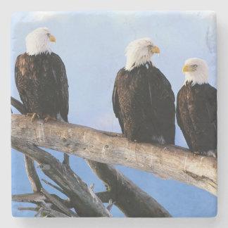 Bald Eagles Stone Coaster
