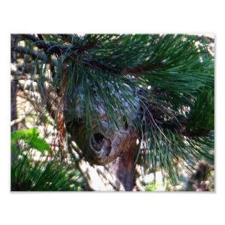 Bald Face Hornet Nest Photo Print