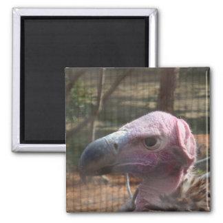 Bald Vulture Magnet - Animal Series