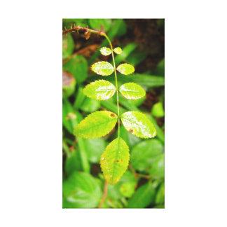 Balhip Rose Leaf Canvas Print