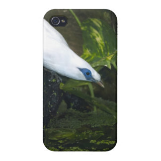 Bali Myna Case For The iPhone 4