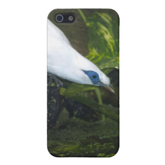 Bali Myna Cover For iPhone 5/5S