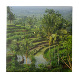 Bali - Young terrace ricefields and palms Ceramic Tile