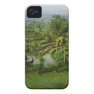 Bali - Young terrace ricefields and palms iPhone 4 Cover