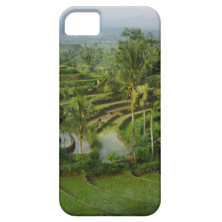 Bali - Young terrace ricefields and palms iPhone 5 Cases