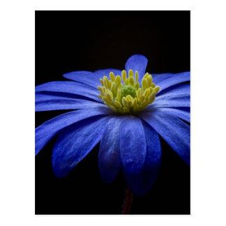 Balkan Anemone Flower Blue Postcard