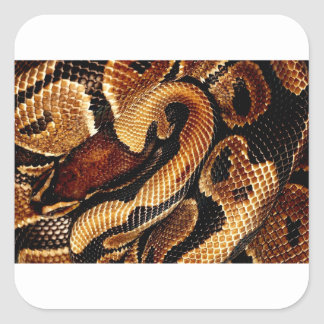 Ball Python Square Sticker