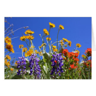 Balsamroot, Lupine and Paintbrush Card