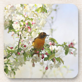 Baltimore Oriole and spring blossoms Coaster