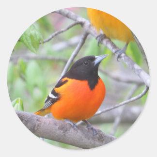Baltimore Oriole Classic Round Sticker