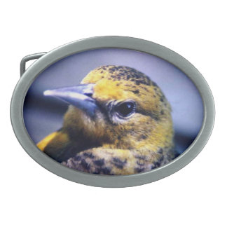 Baltimore Oriole Close-Up Oval Belt Buckle