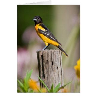 Baltimore Oriole female in flower garden Card