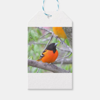 Baltimore Oriole Gift Tags