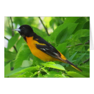 Baltimore Oriole Greeting Card