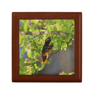 Baltimore Oriole in the Spring Gift Box