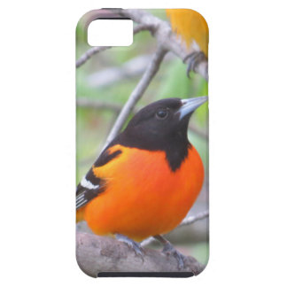 Baltimore Oriole iPhone 5 Cover
