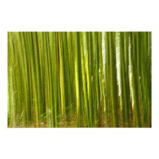 Bamboo abstract photograph