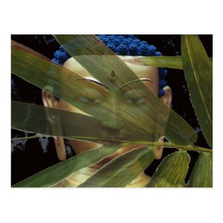 Bamboo Buddha Postcard
