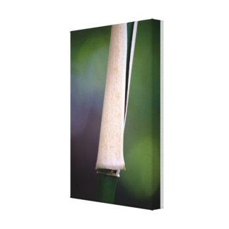 Bamboo cane canvas print