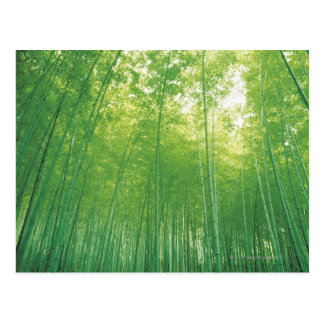 Bamboo Forest 2 Postcard