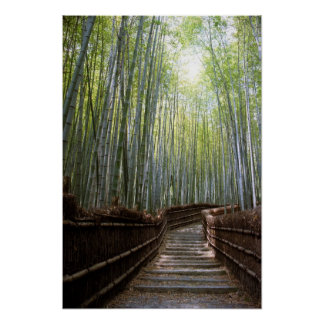 Bamboo Forest Path Poster