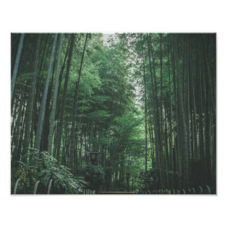 Bamboo Forest Photo Print
