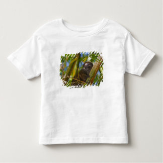 Bamboo lemur in the bamboo forest, Madagascar T Shirt