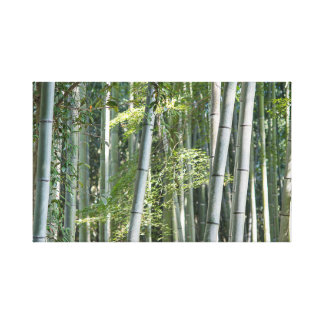 Bamboo Shoots Canvas Print