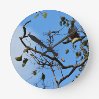 BANANA BIRD IN FLIGHT QUEENSLAND AUSTRALIA WALL CLOCK
