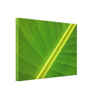 Banana Leaf Macro Gallery Wrap Canvas