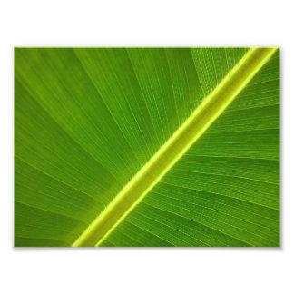 Banana Leaf Macro Photograph