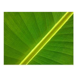 Banana Leaf Macro Postcard
