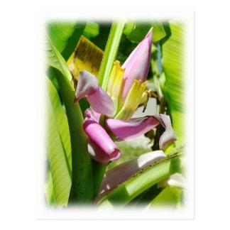 Banana plant postcard