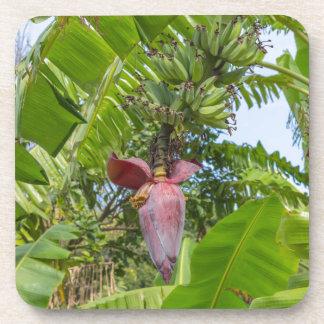 Banana plantation in Sok Kwu Wan Lamma Island Coaster