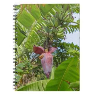 Banana plantation in Sok Kwu Wan Lamma Island Notebook