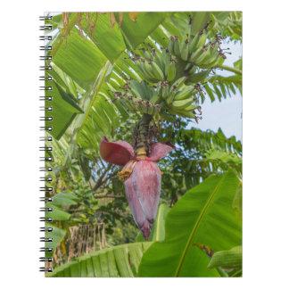 Banana plantation in Sok Kwu Wan Lamma Island Notebooks
