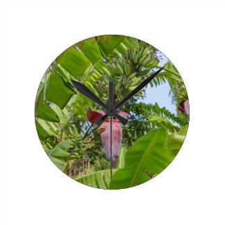 Banana plantation in Sok Kwu Wan Lamma Island Round Clock