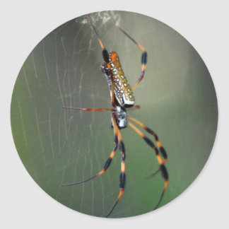 Banana Spider Classic Round Sticker