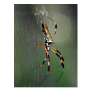 Banana Spider Postcard