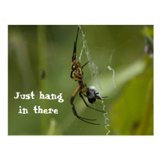Banana Spider Web Just hang in there Postcard
