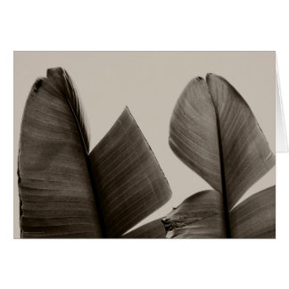 Banana Tree Leaves in Sepia Card