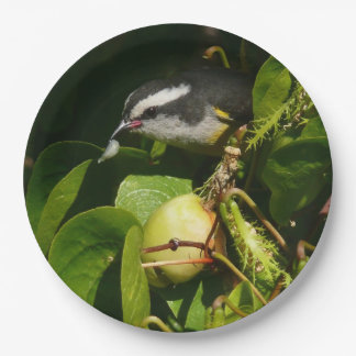 Bananaquit Bird Eating Tropical Nature Photography Paper Plate