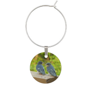 Bananaquit Bird Eating Tropical Nature Photography Wine Charm
