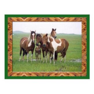 Band Of Appaloosa Horses Postcard
